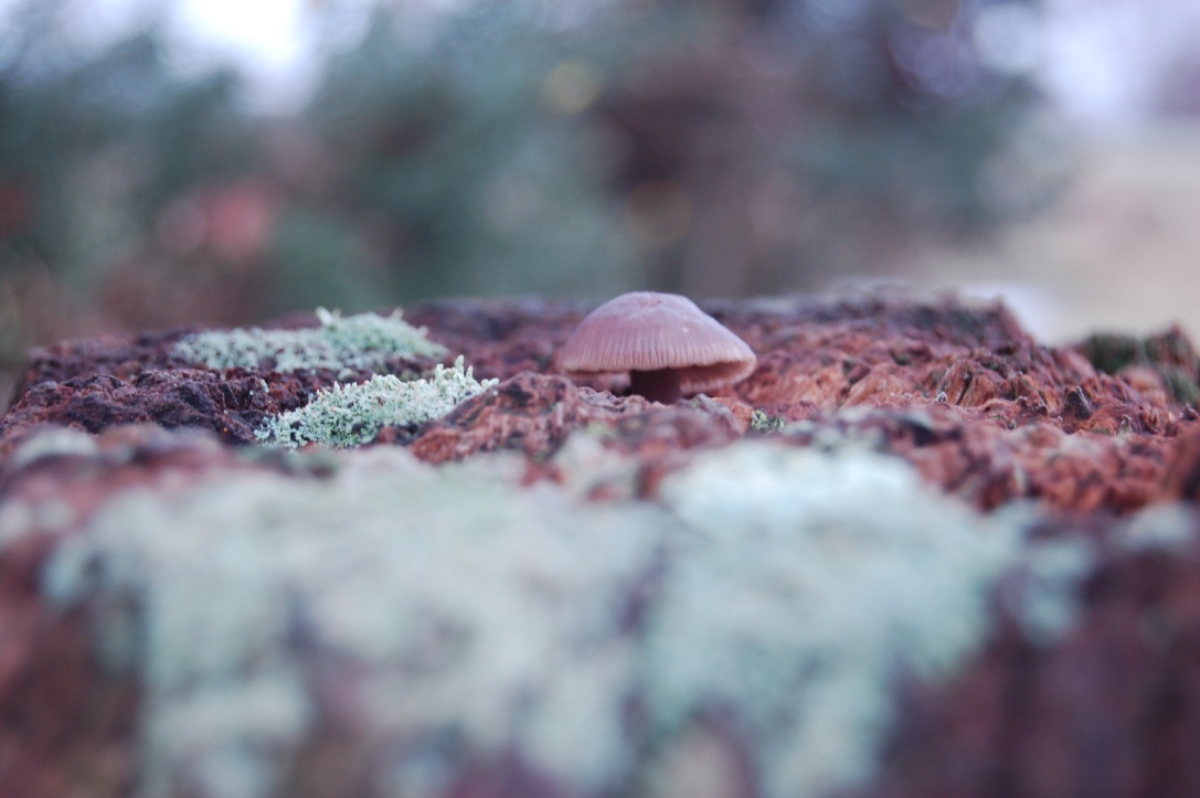 Mushroom growing on a New Forest gate