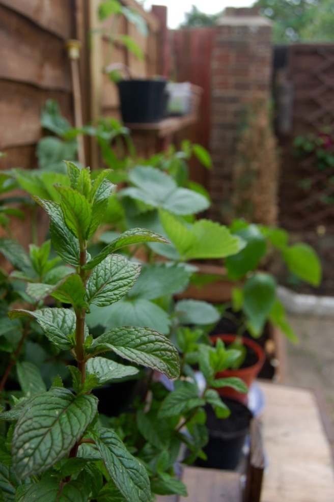 grow-your-own-shelves-mint