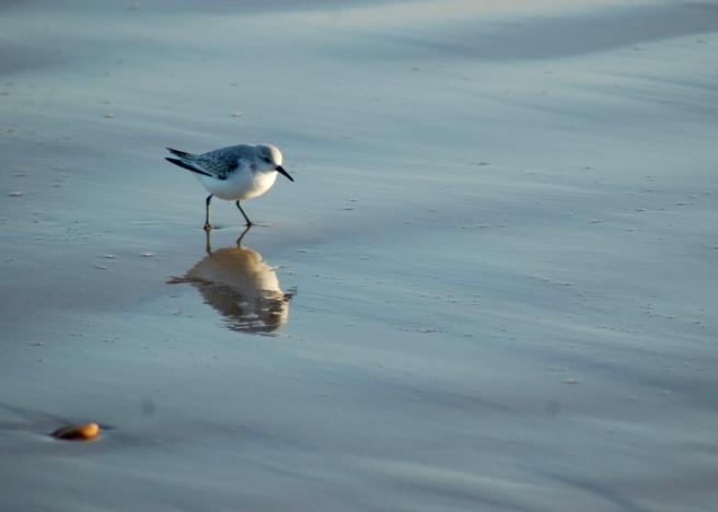 bridlington_beach_bird