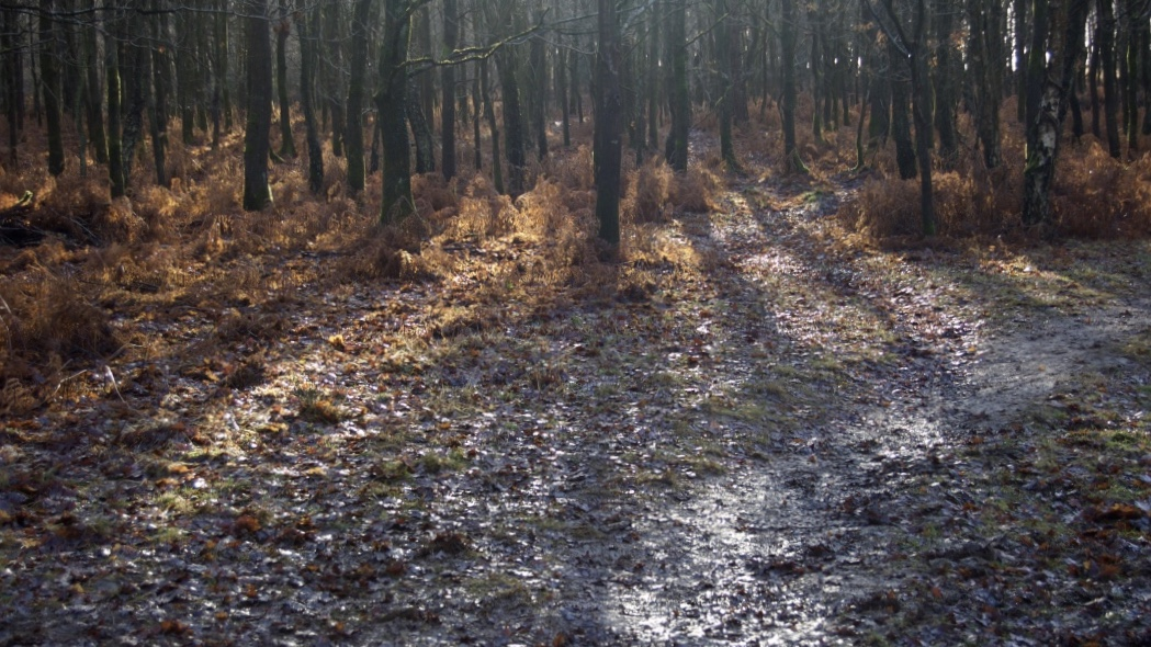 ashdown_forest_trees_winter