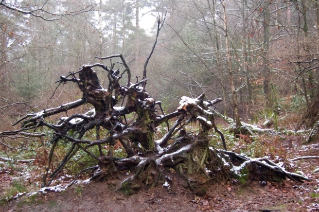 leith_hill_fallen_tree_snow