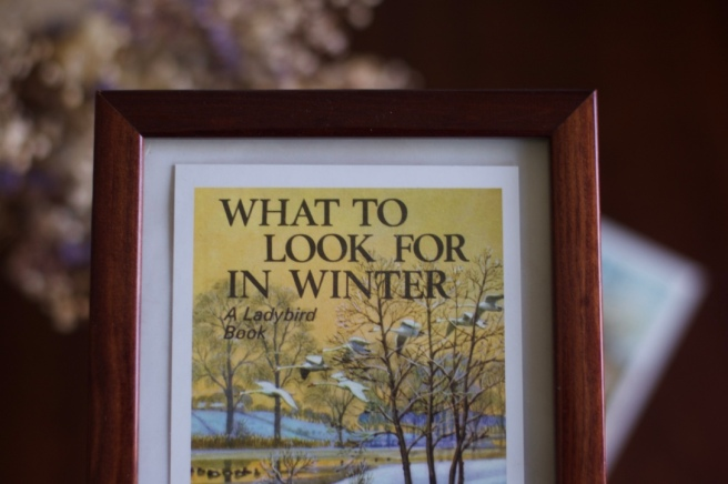 what_to_look_for_in_winter