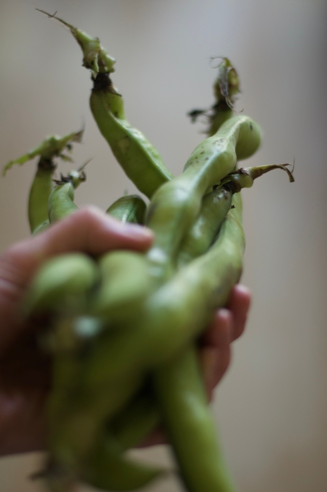 broad_beans