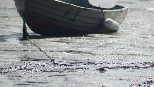 boat_oare_marshes_kent_