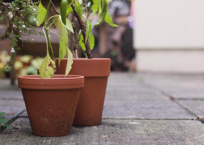chilli_terracotta_plant_Pots